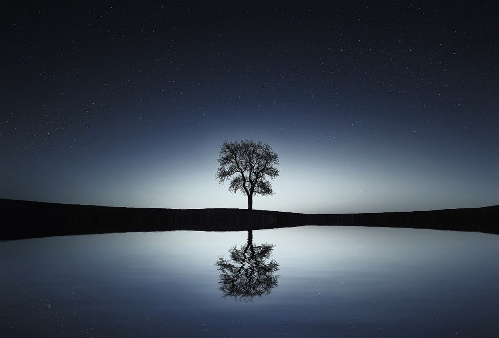 tonal dark horizon with center backlight, silhouetting a lone deciduous tree